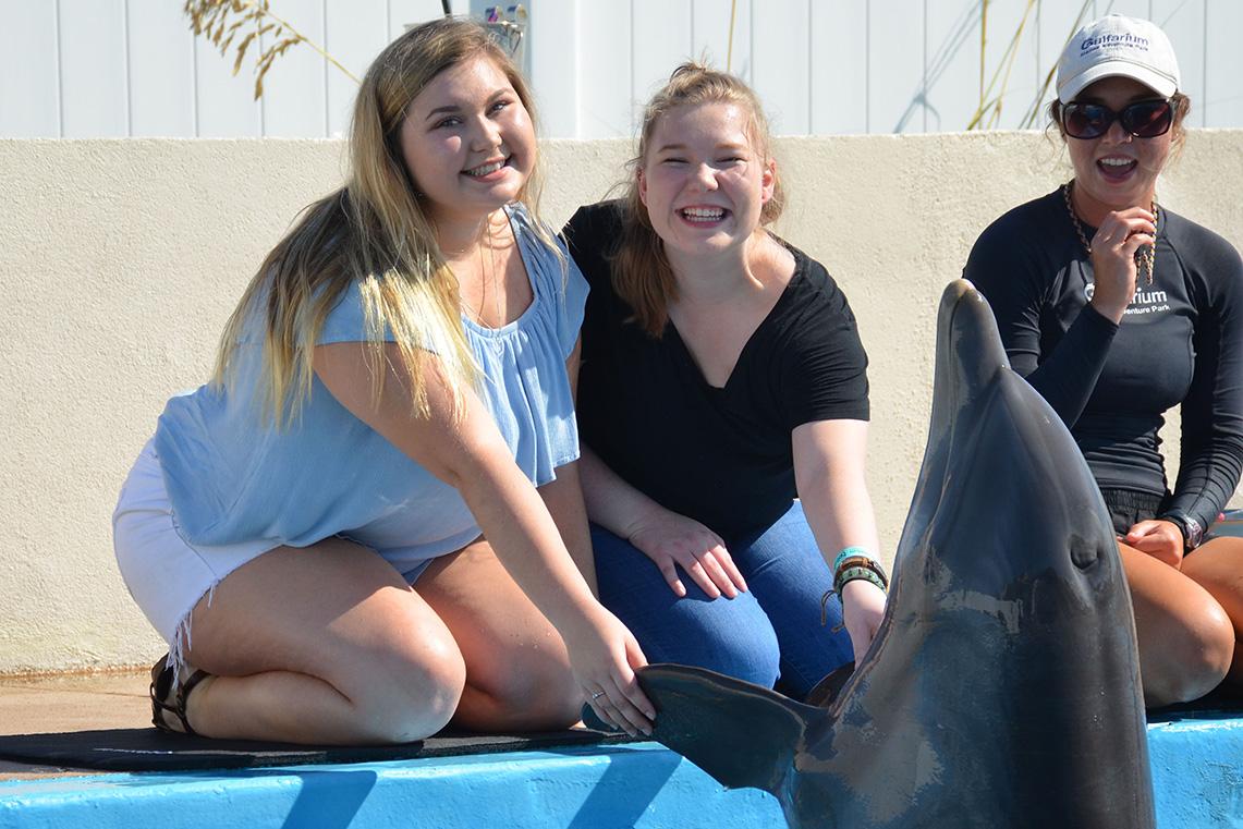 Discover Dolphins, The Gulfarium Marine Adventure Park