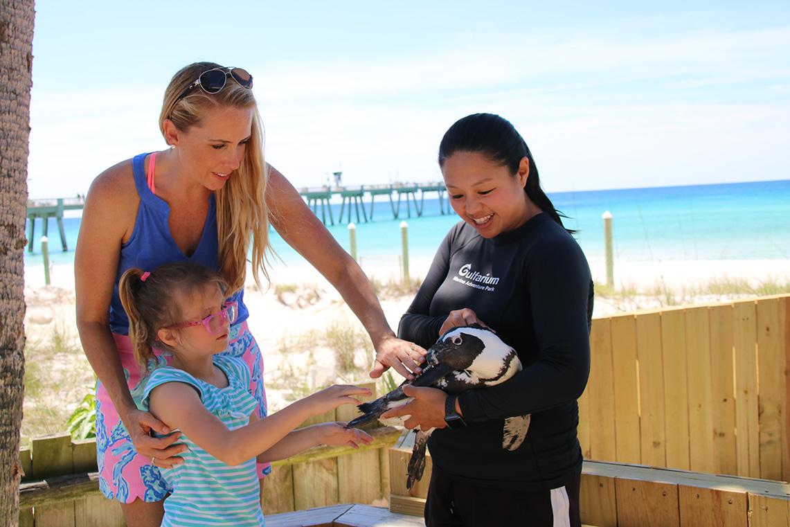 Discover Penguins, The Gulfarium Marine Adventure Park