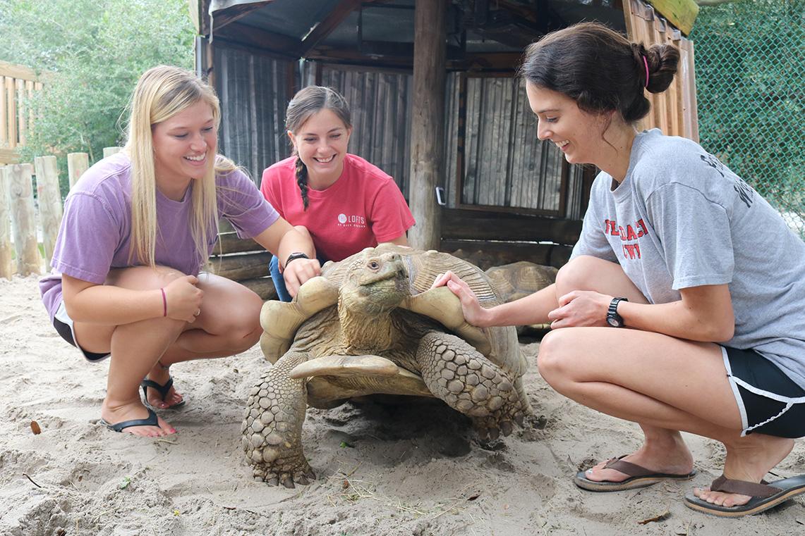 Discover Turtles, The Gulfarium Marine Adventure Park