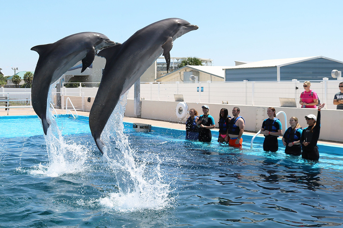 Dolphin Show, The Gulfarium Marine Adventure Park