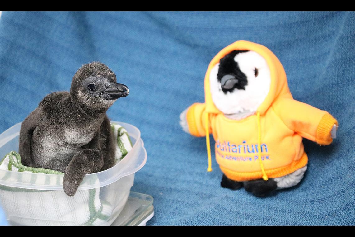 Penguin, The Gulfarium Marine Adventure Park